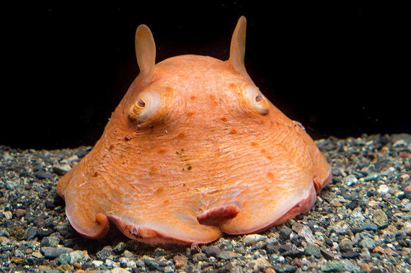深海魚・深海生物を水族館で楽しむ方法! 専門スタッフが解説 ...