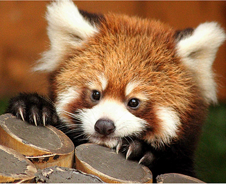 「癒し系 動物」の画像検索結果
