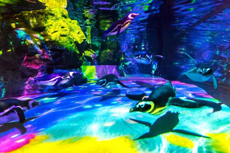 ペンギンが幻想的な光の中で、遊びながら泳ぎ回る!の1枚目写真 | いこレポ