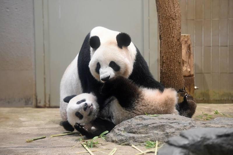 恩賜上野動物園」の子どもが学べて遊べるスポットを厳選紹介! | いこレポ